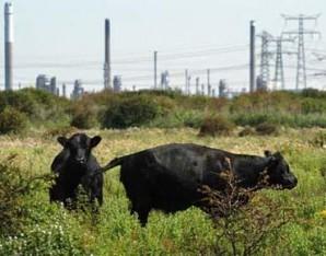 Landbouw, voedsel en biodiversiteit